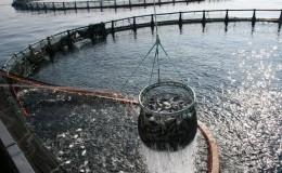 аквакультура_северная рыба