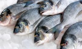 купить ледяную рыбу оптом