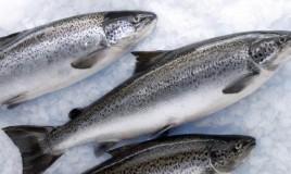 замороженная рыба оптом